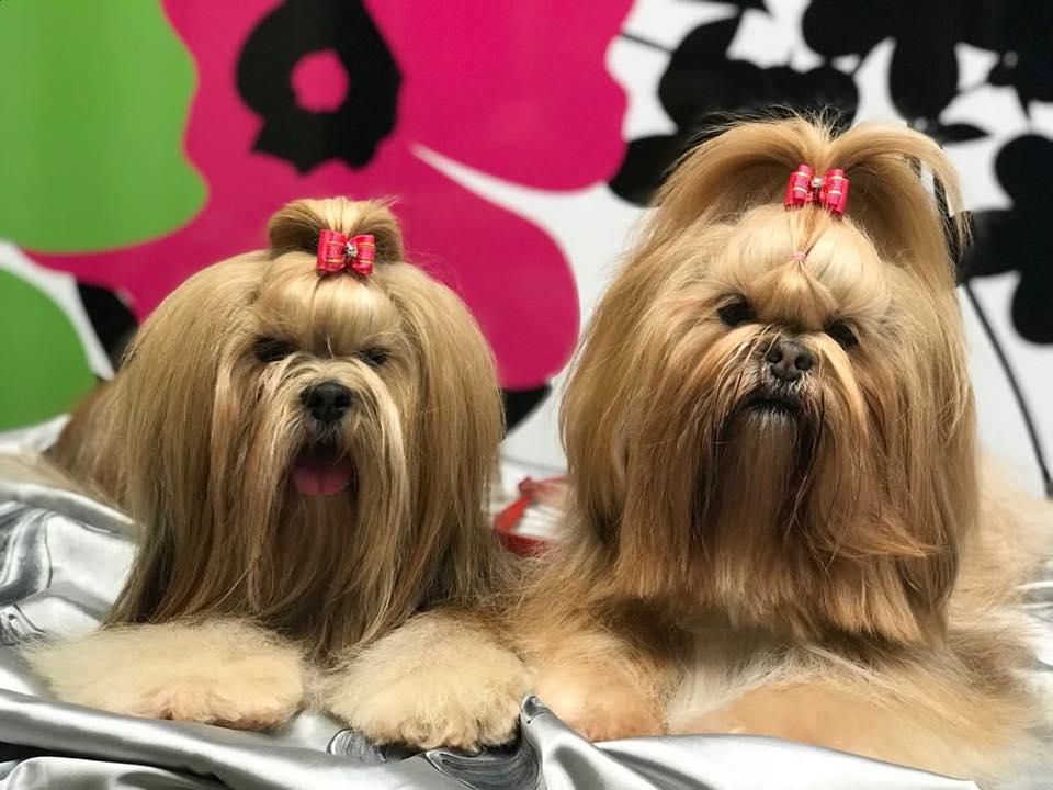 I Cani Che Non Perdono Pelo Best Of Breed